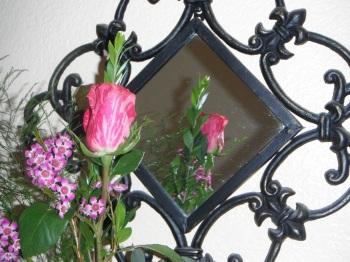fairy tale rose in mirror
